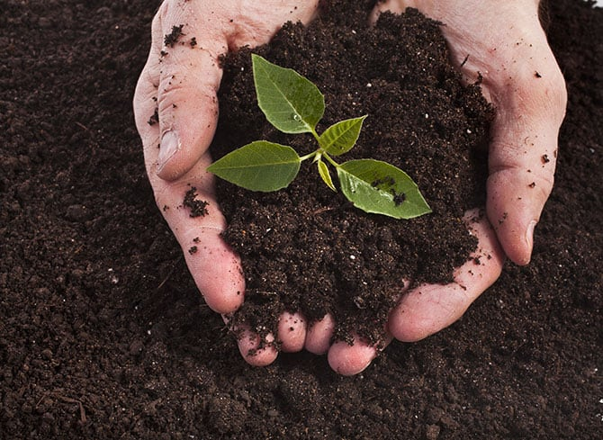 Cupped hands hold some healthy soil with a plant growing in the middle