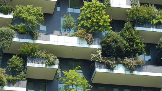 Trees and bushes growing in a vertical garden on the side of a building